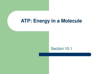 ATP: Energy in a Molecule