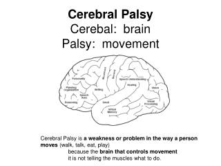 Cerebral Palsy Cerebal:  brain         Palsy:  movement