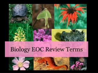 Biology EOC Review Terms
