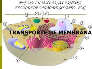 Prof. MSc LÍLIAN CARLA CARNEIRO FACULDADE UNIÃO DE GOYASES - FUG