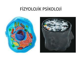 F İZYOLOJİK PSİKOLOJİ