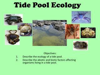 Tide Pool Ecology