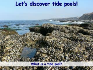 Let's discover tide pools!