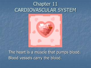 Chapter 11 CARDIOVASCULAR SYSTEM