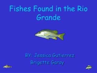 Fishes Found in the Rio Grande