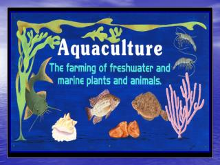 The husbandry of marine or saltwater organisms