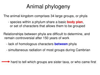 Animal phylogeny