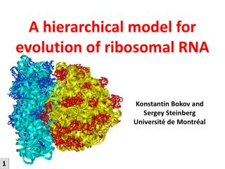 A hierarchical model for evolution of ribosomal RNA