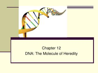 Chapter 12 DNA: The Molecule of Heredity