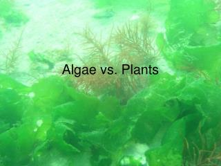 Algae vs. Plants