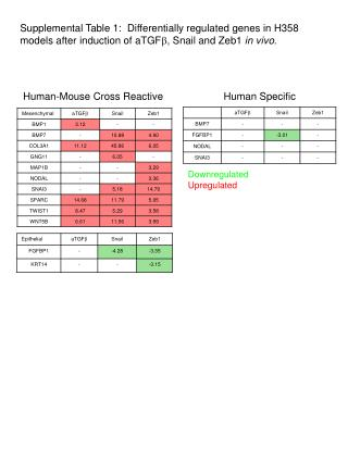 Human-Mouse Cross Reactive