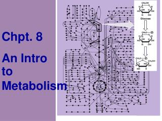 Chpt. 8 An Intro  to  Metabolism