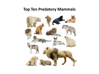 Top Ten Predatory  Mammals