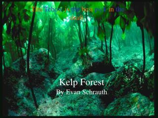 Kelp Forest   By Evan Schrauth