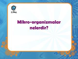 Mikro-organizmalar  nelerdir?