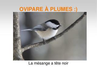 OVIPARE � PLUMES :)