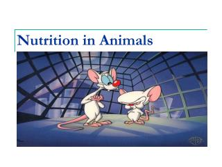 Nutrition in Animals