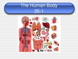 The Human Body 35-1