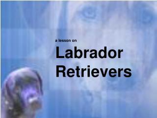 a lesson on  Labrador Retrievers