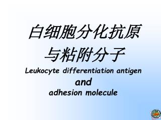 白细胞分化抗原 与粘附分子 Leukocyte differentiation antigen and adhesion molecule