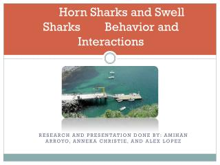 Horn Sharks and Swell Sharks        Behavior and Interactions