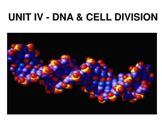 UNIT IV - DNA & CELL DIVISION