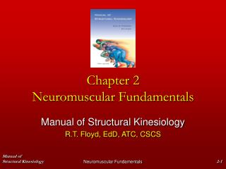 Chapter 2  Neuromuscular Fundamentals