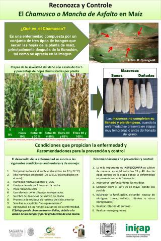 El desarrollo de la enfermedad se asocia a las siguientes condiciones ambientales y de manejo: