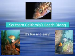 Southern California�s Beach Diving