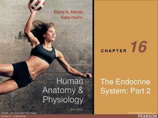The Endocrine  System: Part 2
