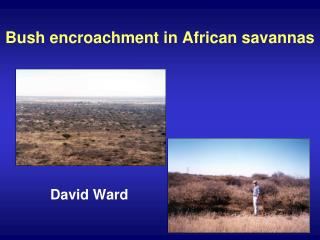 Bush encroachment in African savannas