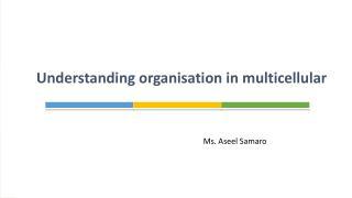 Understanding organisation in multicellular