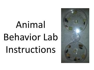Animal Behavior Lab Instructions