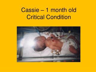 Cassie – 1 month old Critical Condition