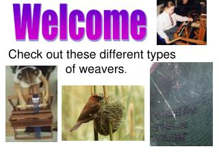 Check out these different types of weavers .