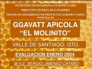 "GGAVATT APICOLA ""EL MOLINITO"""