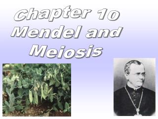 Chapter 10 Mendel and Meiosis