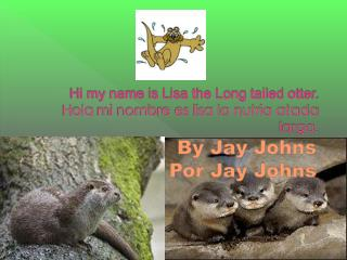 Hi my name is Lisa the Long tailed otter.  H ola  mi nombre es lisa la nutria atada larga.