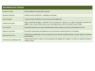 Informaci�n_Tec_Plaga