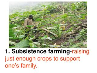 Subsistence farming - raising  just enough crops to support one�s family.
