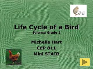 Life Cycle of a Bird Science Grade 1