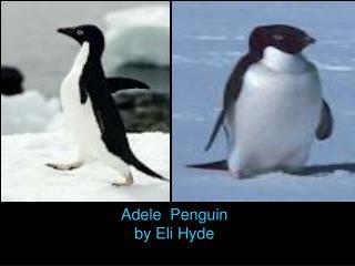 Adele  Penguin by Eli Hyde