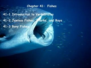 Chapter 41:  Fishes