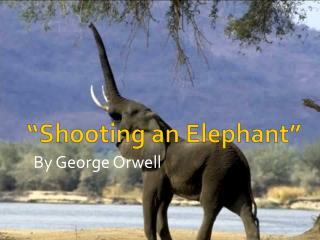 """Shooting an Elephant"""