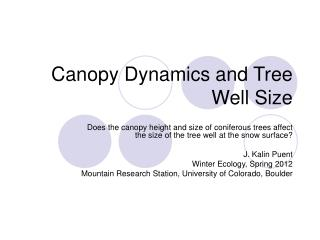 Canopy Dynamics and Tree Well Size