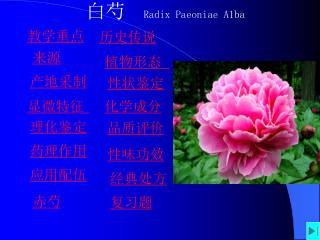 白芍 Radix Paeoniae A1ba