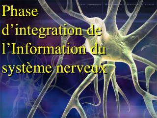 Phase d'integration de l'Information du  système nerveux