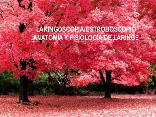 LARINGOSCOPIA/ESTROBOSCOPIO ANATOMÍA Y FISIOLOGÍA DE LARINGE