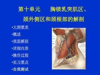 第十单元        胸锁乳突肌区、 颈外侧区和颈根部的解剖 大纲要求  概述  表面解剖  详细内容 操作过程 实习要点 自我测试