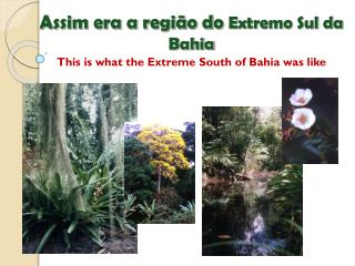 Assim era a região do  Extremo Sul da Bahia This is what the Extreme South of Bahia was like